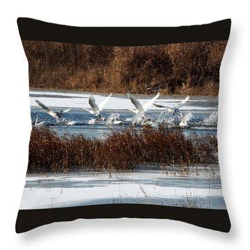 Throw Pillow featuring the photograph Trumpeter Swans by John Freidenberg