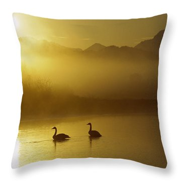 Trumpeter Swan Pair At Sunset Throw Pillow by Michael Quinton