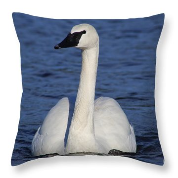 Majestic Trumpeter Swan  Throw Pillow
