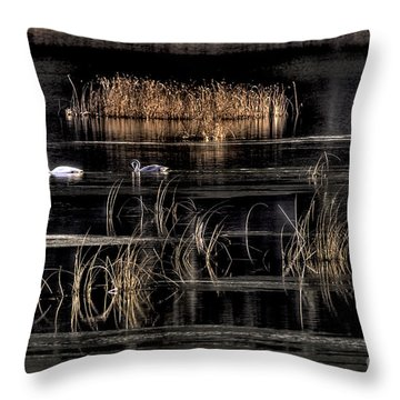 Trumpeter Swans A Swimming Throw Pillow