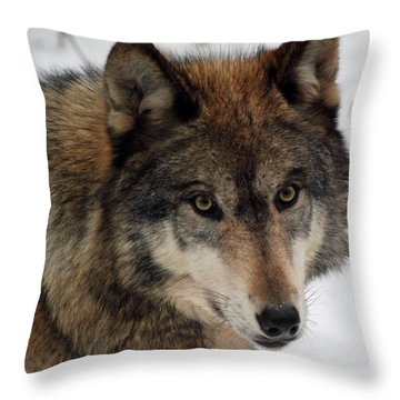 Throw Pillow featuring the photograph Trusting by Richard Bryce and Family
