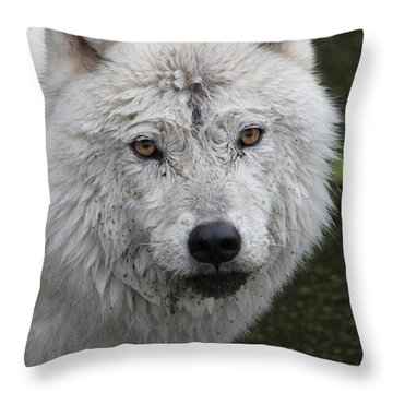 Trusting Throw Pillow