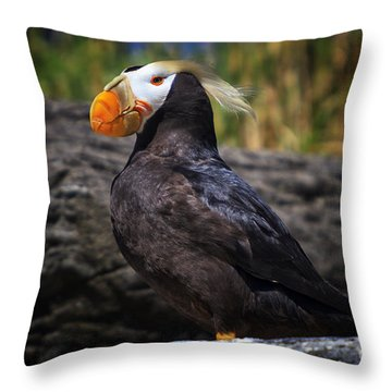 Tufted Puffin Throw Pillow by Mark Kiver