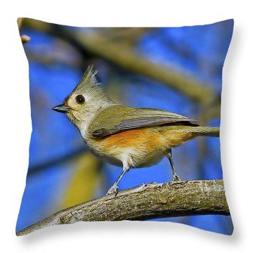 Tufted Titmouse Throw Pillow by Gary Holmes