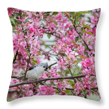 Tufted Titmouse In A Pear Tree Square Throw Pillow by Bill Wakeley