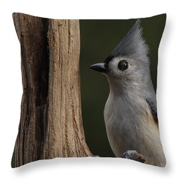 Tufted Titmouse On Cedar Snag Throw Pillow