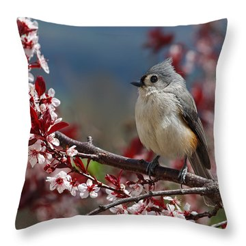 Tufted Titmouse On Ornamental Plum Blossoms Throw Pillow by Lara Ellis