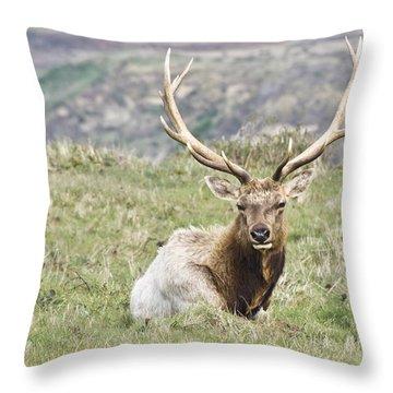 Tule Elk Bull Throw Pillow by Priya Ghose