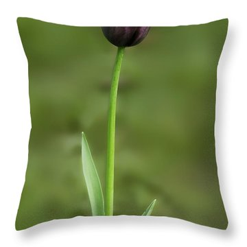 Throw Pillow featuring the photograph Tulip 3 by Ram Vasudev