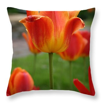 Tulip Collection Photo 1 Throw Pillow