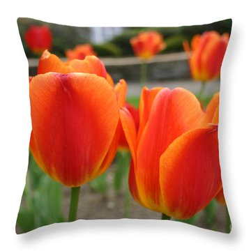 Tulip Collection Photo 2 Throw Pillow