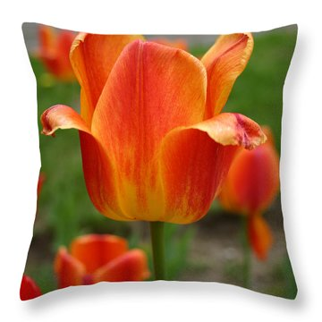 Tulip Collection Photo 4 Throw Pillow
