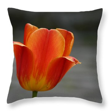 Tulip Collection Photo 5 Throw Pillow