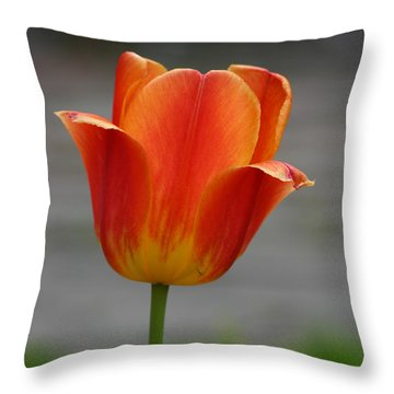 Tulip Collection Photo 6 Throw Pillow