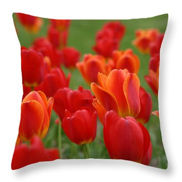 Tulip Collection Photo 7 Throw Pillow