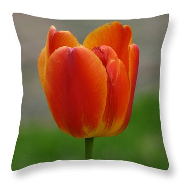 Tulip Collection Photo 8 Throw Pillow