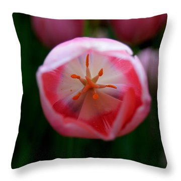Throw Pillow featuring the photograph Tulip Beauty  by Haleh Mahbod