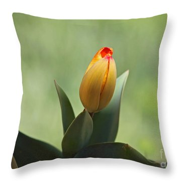 Throw Pillow featuring the photograph New Beginning by Lisa L Silva