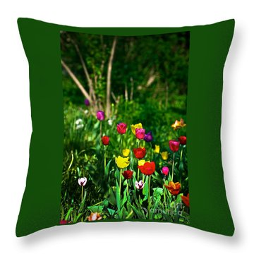 Tulip Rainbow Throw Pillow