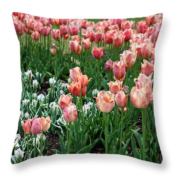 Tulips Galore  Throw Pillow by Suzanne Gaff