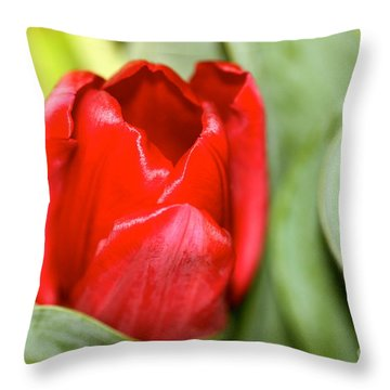 Tulips In Study 4 Throw Pillow by Cathy Dee Janes