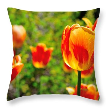 Throw Pillow featuring the photograph Tulips by Joe  Ng