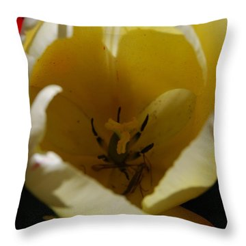 Throw Pillow featuring the photograph Tulip's Kiss by Jani Freimann