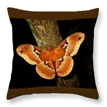 Tuliptree Silkmoth Throw Pillow