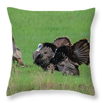 Turkey Mating Ritual Throw Pillow by Cheryl Baxter