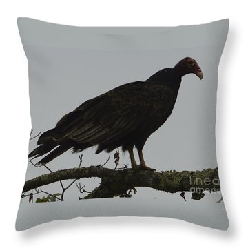 Turkey Vulture Throw Pillow by Randy Bodkins