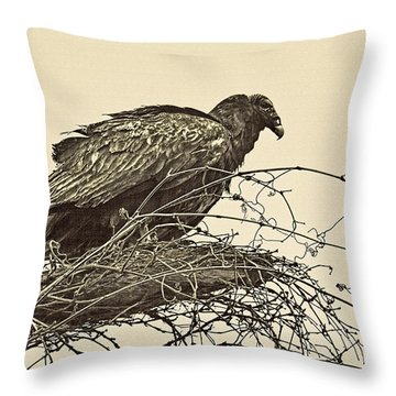 Turkey Vulture V2 Throw Pillow by Douglas Barnard