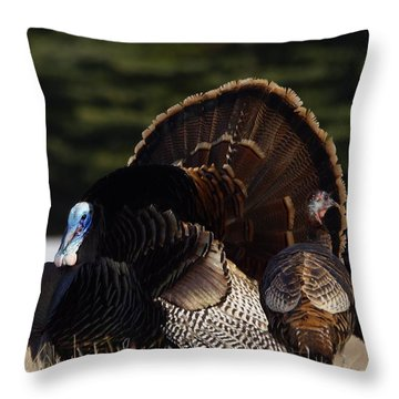 Turkey's Throw Pillow by Steven Clipperton