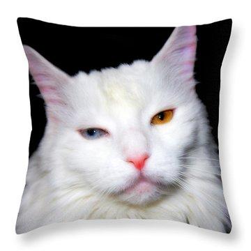 Throw Pillow featuring the photograph Turkish Angora by Aurelio Zucco
