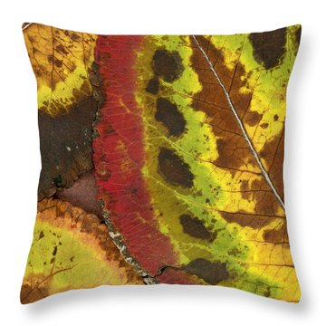 Turning Leaves 3 Throw Pillow by Stephen Anderson