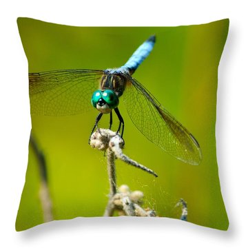 Turquoise Dragonfly Throw Pillow by Lorri Crossno