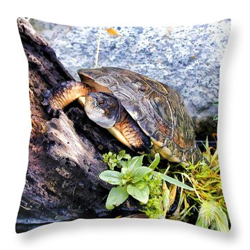 Throw Pillow featuring the photograph Turtle 1 by Dawn Eshelman