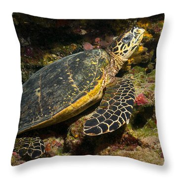 Turtle Cavern Throw Pillow by Aaron Whittemore