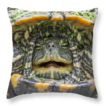Turtle Covered With Duckweed Throw Pillow