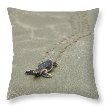 Turtle Tracks Throw Pillow