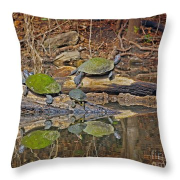 Turtle Trio Throw Pillow