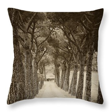 Throw Pillow featuring the photograph Tuscan Pines by Hugh Smith