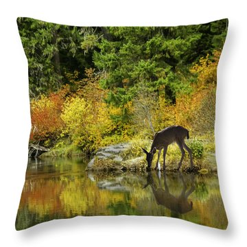 Tuti Fruti Colors And Eye Candy Reflections Throw Pillow