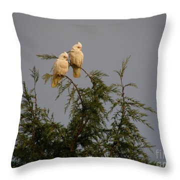 Twin Cockatoos Throw Pillow by Bev Conover