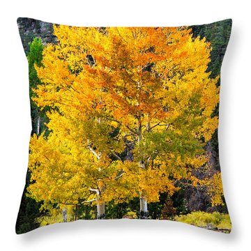 Twin Fall Trees Throw Pillow