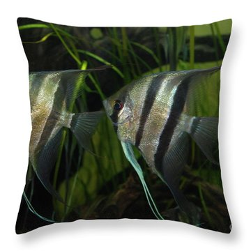 Twins Throw Pillow by George Mount