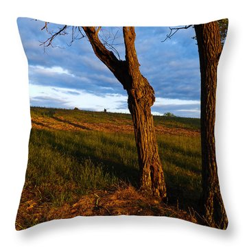 Twisted Tree Throw Pillow by Nick Kirby