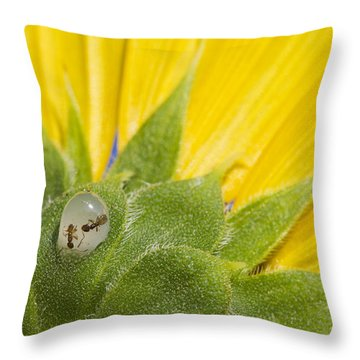 Two Ants Entombed In Sunflower Resin Throw Pillow
