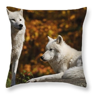 Throw Pillow featuring the photograph Two Arctic Wolves On Rock Hill by Wolves Only