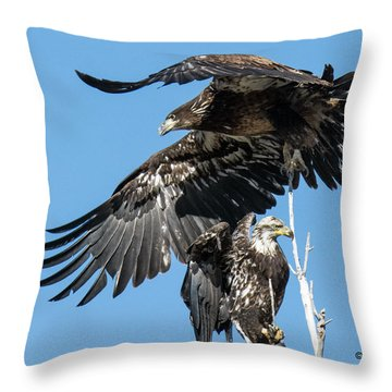 Two Bald Eagles At Cherry Creek Throw Pillow