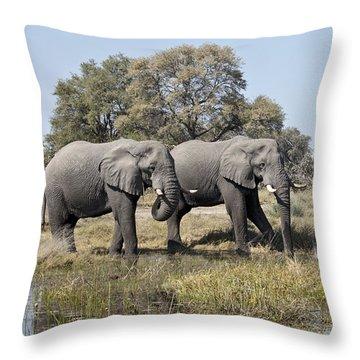 Two Bull African Elephants - Okavango Delta Throw Pillow by Liz Leyden